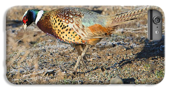 Ring-necked Pheasant Rooster IPhone 6 Plus Case by Mike Dawson