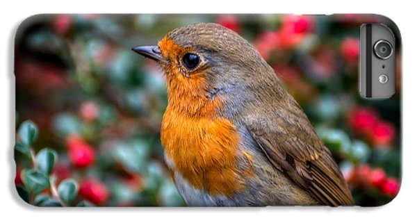 Robin Redbreast IPhone 6 Plus Case by Adrian Evans