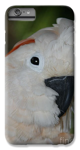 Salmon Crested Cockatoo IPhone 6 Plus Case by Sharon Mau