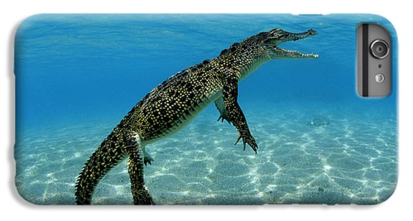 Saltwater Crocodile IPhone 6 Plus Case by Franco Banfi and Photo Researchers