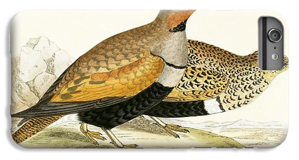 Sand Grouse IPhone 6 Plus Case by English School