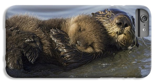 Sea Otter Mother With Pup Monterey Bay IPhone 6 Plus Case by Suzi Eszterhas