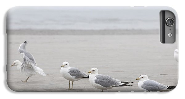 Seagulls On Foggy Beach IPhone 6 Plus Case by Elena Elisseeva