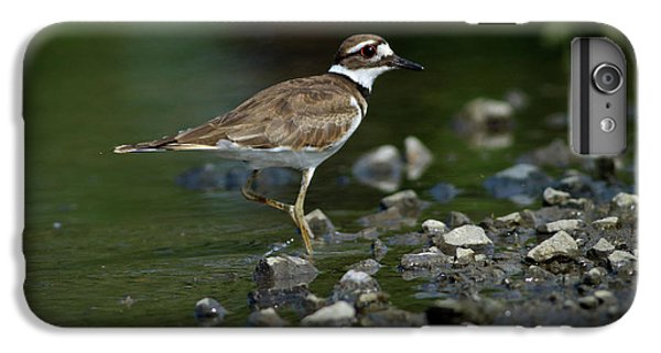 Killdeer  IPhone 6 Plus Case by Douglas Stucky