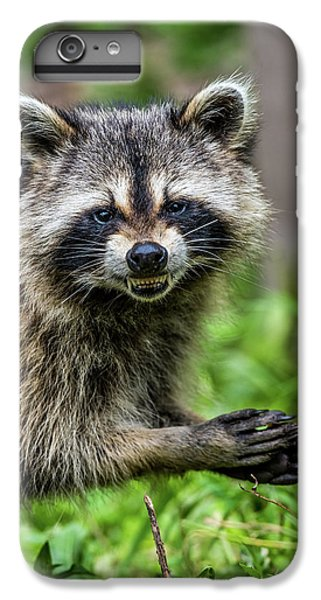 Smiling Raccoon IPhone 6 Plus Case by Paul Freidlund