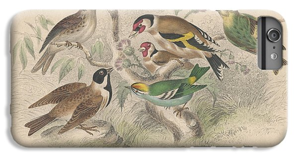 Songbirds IPhone 6 Plus Case by Oliver Goldsmith