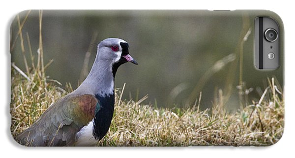 Southern Lapwing IPhone 6 Plus Case by Jean-Louis Klein & Marie-Luce Hubert