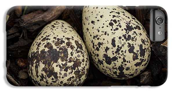 Speckled Killdeer Eggs By Jean Noren IPhone 6 Plus Case by Jean Noren