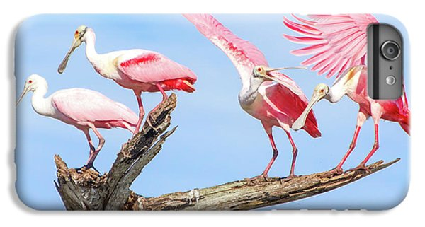 Spoonbill Party IPhone 6 Plus Case by Mark Andrew Thomas