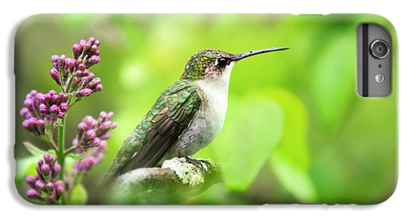 Spring Beauty Ruby Throat Hummingbird IPhone 6 Plus Case by Christina Rollo