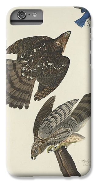 Stanley Hawk IPhone 6 Plus Case by John James Audubon