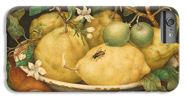 Still Life With A Bowl Of Citrons IPhone 6 Plus Case by Giovanna Garzoni