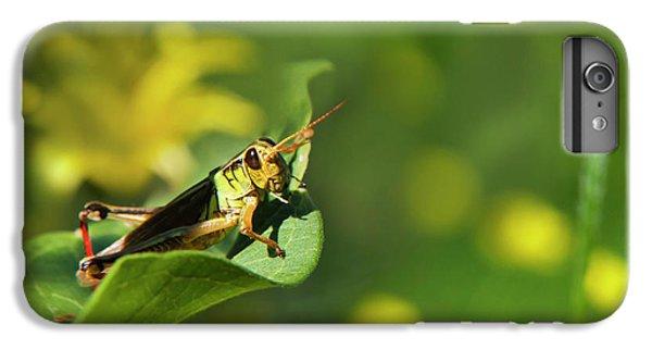 Green Grasshopper IPhone 6 Plus Case by Christina Rollo
