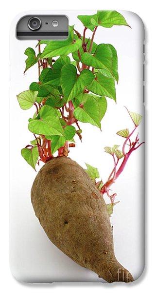 Sweet Potato IPhone 6 Plus Case by Gaspar Avila