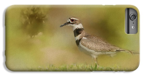 The Elusive Killdeer IPhone 6 Plus Case by Jai Johnson