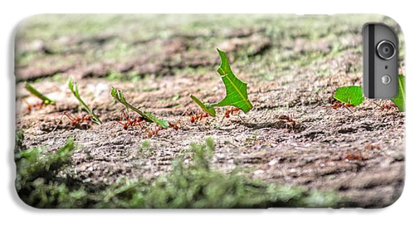 The Leaf Parade  IPhone 6 Plus Case by Betsy Knapp