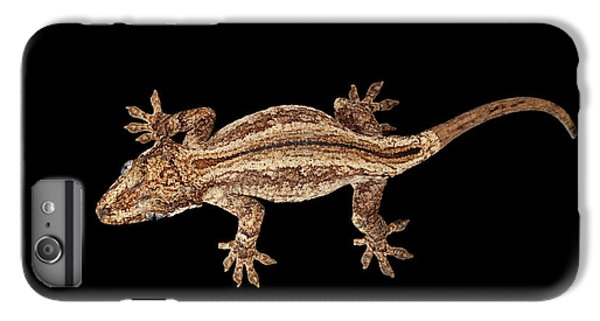 Top View Of Gargoyle Gecko, Rhacodactylus Auriculatus Staring Isolated On Black Background. Native T IPhone 6 Plus Case by Sergey Taran