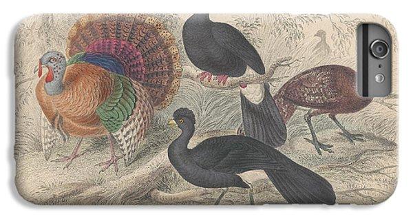 Turkeys IPhone 6 Plus Case by Oliver Goldsmith