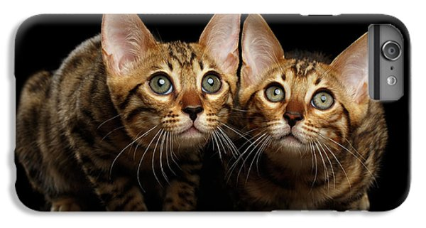 Two Bengal Kitty Looking In Camera On Black IPhone 6 Plus Case by Sergey Taran