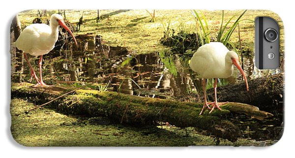 Two Ibises On A Log IPhone 6 Plus Case by Carol Groenen