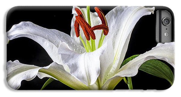 White Tiger Lily Still Life IPhone 6 Plus Case by Garry Gay