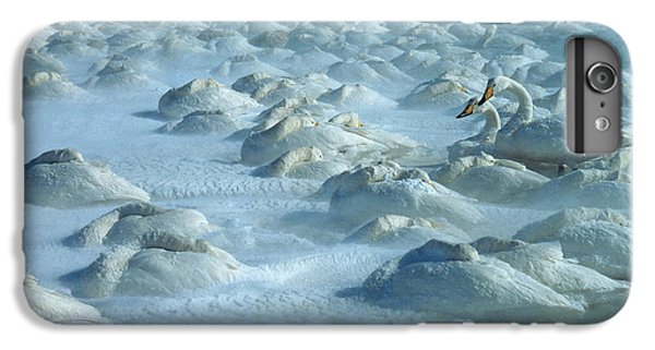 Whooper Swans In Snow IPhone 6 Plus Case by Teiji Saga and Photo Researchers