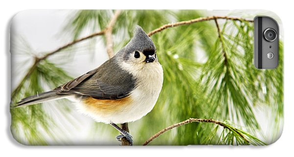 Winter Pine Bird IPhone 6 Plus Case by Christina Rollo