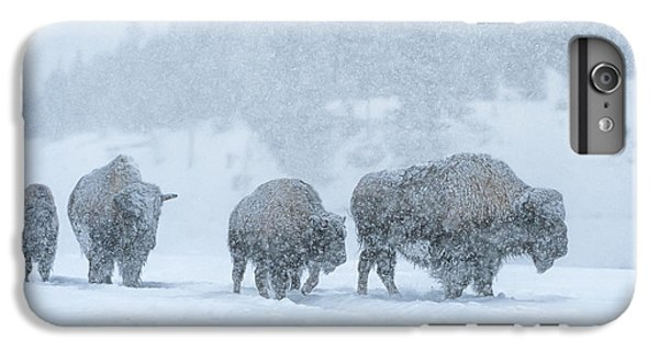 Winter's Burden IPhone 6 Plus Case by Sandra Bronstein