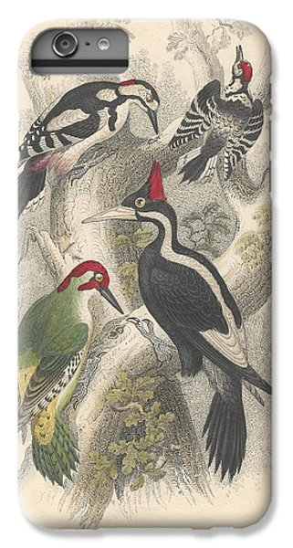 Woodpeckers IPhone 6 Plus Case by Oliver Goldsmith