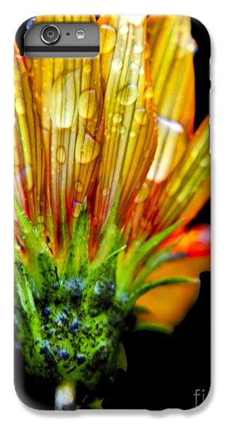 Yellow And Orange Wet Zinnias. IPhone 6 Plus Case by Elizabeth Greene
