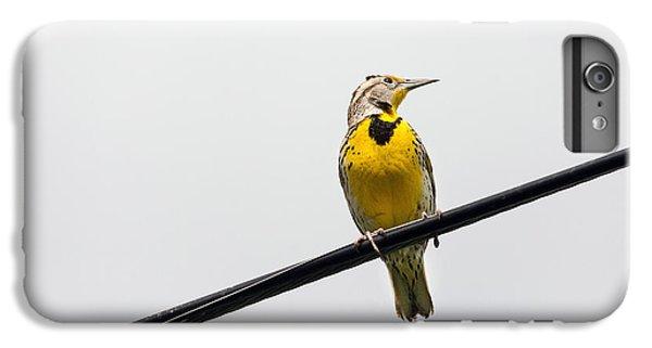 Yellow Bird IPhone 6 Plus Case by Rebecca Cozart