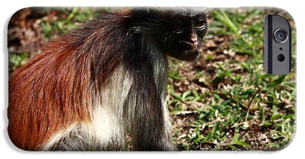Colobus Monkey IPhone Case by Aidan Moran