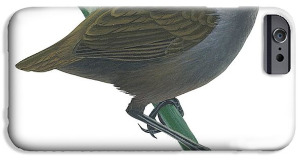 Wrenthrush IPhone Case by Anonymous