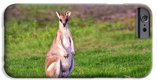 A Male Grey Kangaroos (macropus IPhone 6s Case by Miva Stock