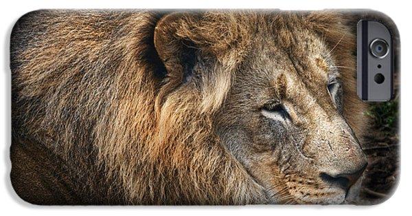 African Lion IPhone Case by Tom Mc Nemar
