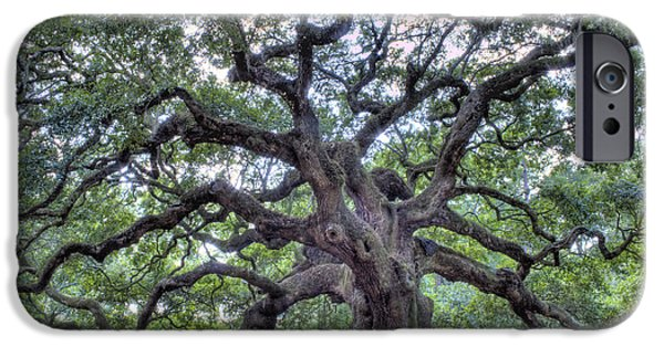 Angel Oak IPhone Case by Dustin K Ryan