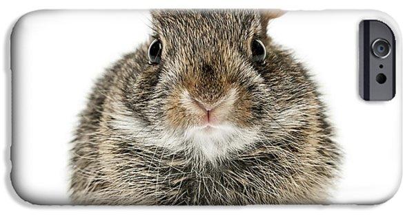 Baby Cottontail Bunny Rabbit IPhone Case by Elena Elisseeva