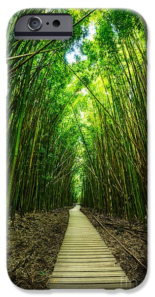 Bamboo Forest IPhone Case by Jamie Pham