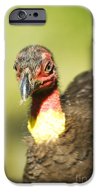 Brush Scrub Turkey IPhone 6s Case by Jorgo Photography - Wall Art Gallery