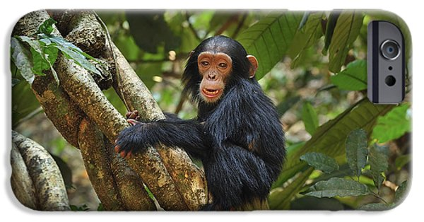 Chimpanzee Baby On Liana Gombe Stream IPhone 6s Case by Thomas Marent