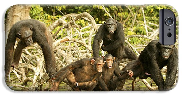 Chimpanzees On Mangroves IPhone Case by Jean-Michel Labat