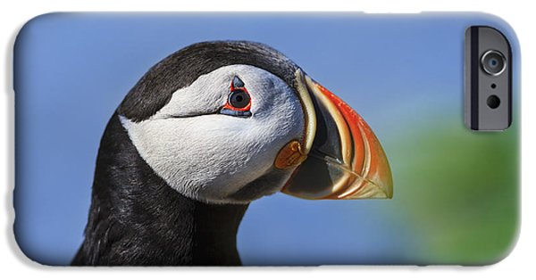 Close Up Of Atlantic Puffin Fratercula IPhone Case by Yves Marcoux