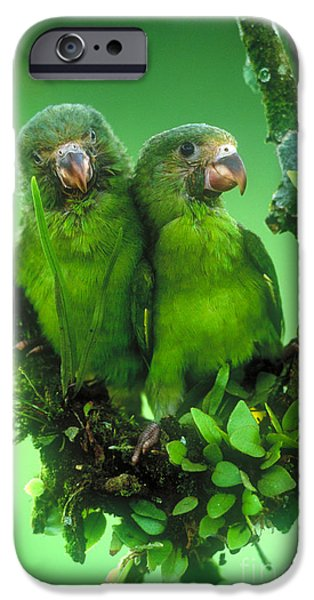 Cobalt-winged Parakeets IPhone 6s Case by Art Wolfe