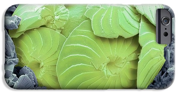 Coccolithophore Shell IPhone Case by Steve Gschmeissner