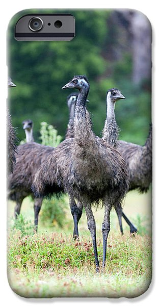 Emu (dromaius Novaehollandiae IPhone 6s Case by Martin Zwick