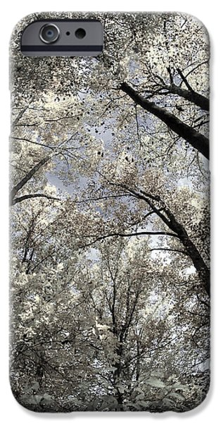 Fall Trees IPhone Case by Judy Gallagher