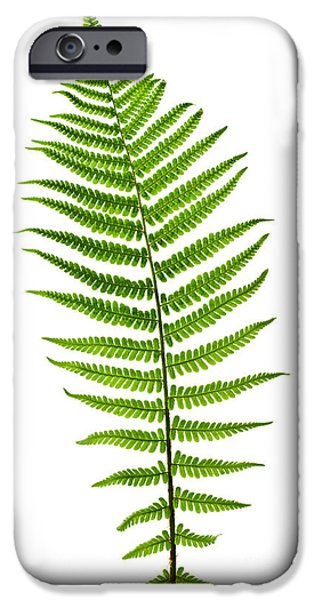 Fern Leaf IPhone Case by Elena Elisseeva