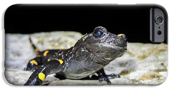 Fire Salamander (salamandra Salamandra) IPhone 6s Case by Photostock-israel