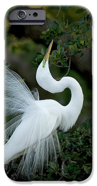 Florida, St Augustine Great Egret IPhone Case by Jaynes Gallery