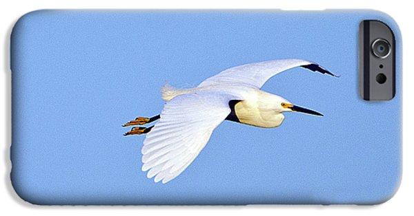 Florida, Venice, Snowy Egret Flying IPhone 6s Case by Bernard Friel